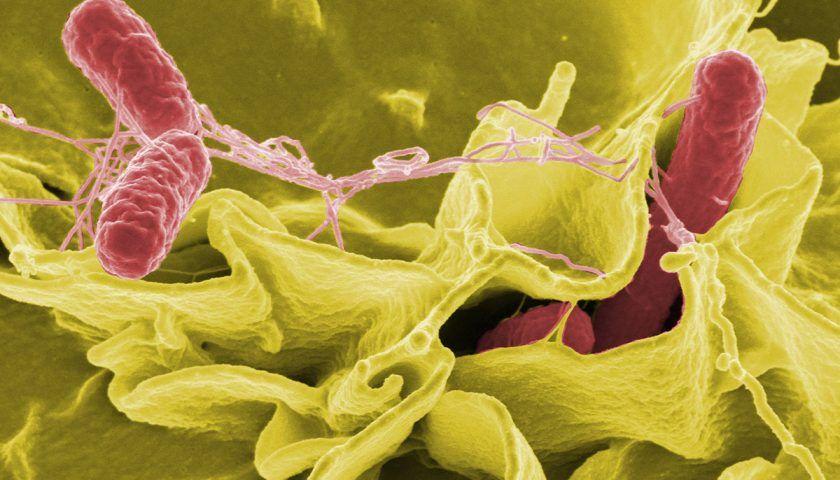Probiyotik Desteğinin Solunum Yolları Enfeksiyonlarında Önemi