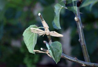 Bir Bitki Bilimcinin Anlatımıyla İnisiyasyon, Empowerment ve Uzaktan Şifa Nedir ve Ne Gerektirir?