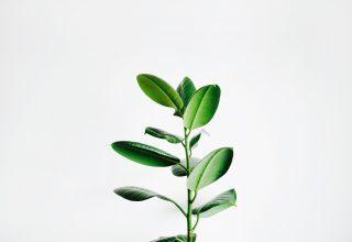 Doğanın Çağrısına Kulak Ver : Fitoterapi – Tıbbi Bitkilerin Tarihçesi Günümüz