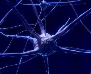 Bağırsak Bakterileri ve Beynimiz