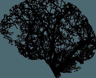 Beyniniz Hakkında Bilmeniz Gereken 7 Gerçek