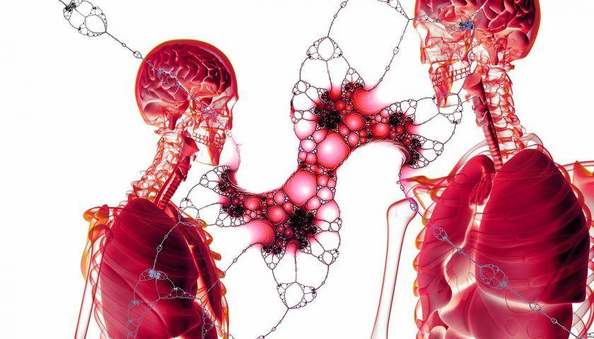 İnsan Vücudundaki Hücrelerin Ömrü