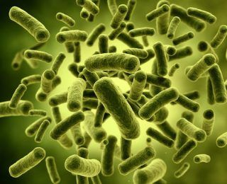 Lactobacillus acidophilus Nasıl Bir Probiyotik?