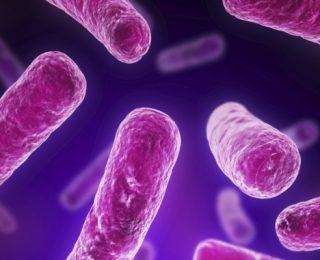 Probiyotik Kullanmak İçin 10 Neden!