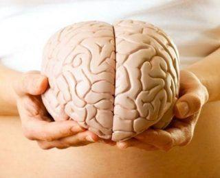 Beyin – Bağırsak Hattı Nedir?