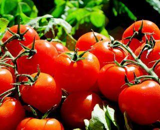 Domates Meyve Midir Sebze Midir?
