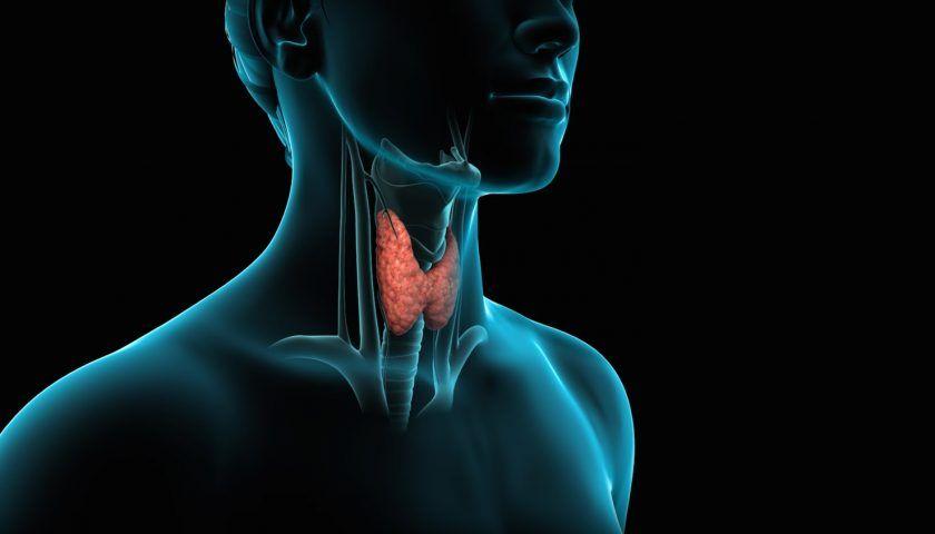 Tiroid Hastalıklarının Belirtileri Nelerdir?