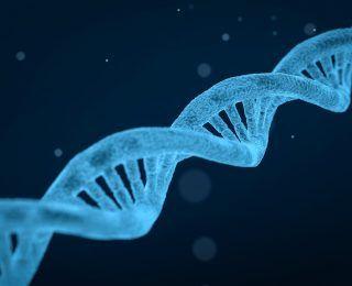 Bilim Adamları Genetik Kodlarımızdan Ne Kadar Yaşayabileceğimizi Hesaplayabiliyorlar