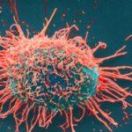 Yeni Virüs Kanserle Savaş Bitebilir