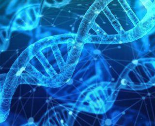 Araştırma: DNA Yaşam Süresi Hakkında İpuçları Veriyor