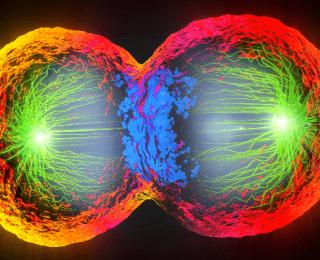Hücre Bölünmesi Nasıl Olur?