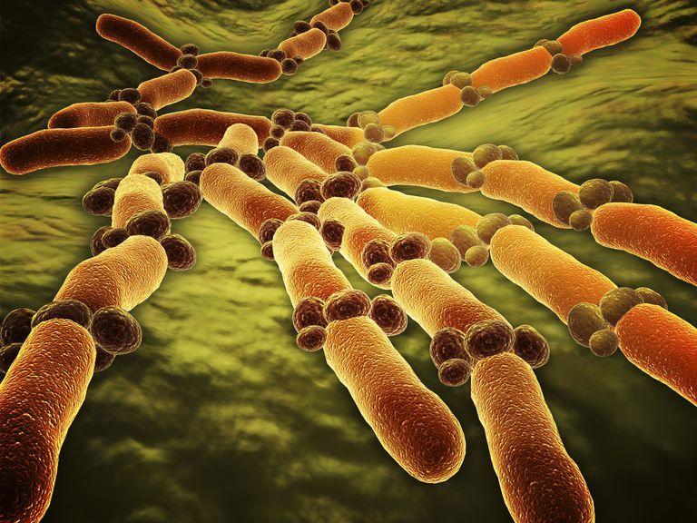 İBAB (SİBO): İnce Bağırsakta Aşırı Bakteriyel Çoğalması Nedir?