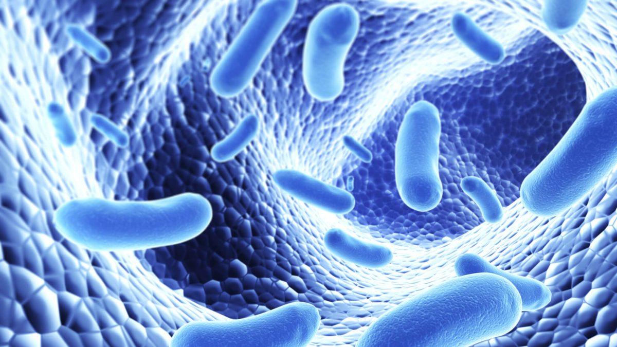 İBAB (SİBO): İnce Bağırsakta Aşırı Bakteriyel Çoğalma Nasıl Tedavi Edilir?