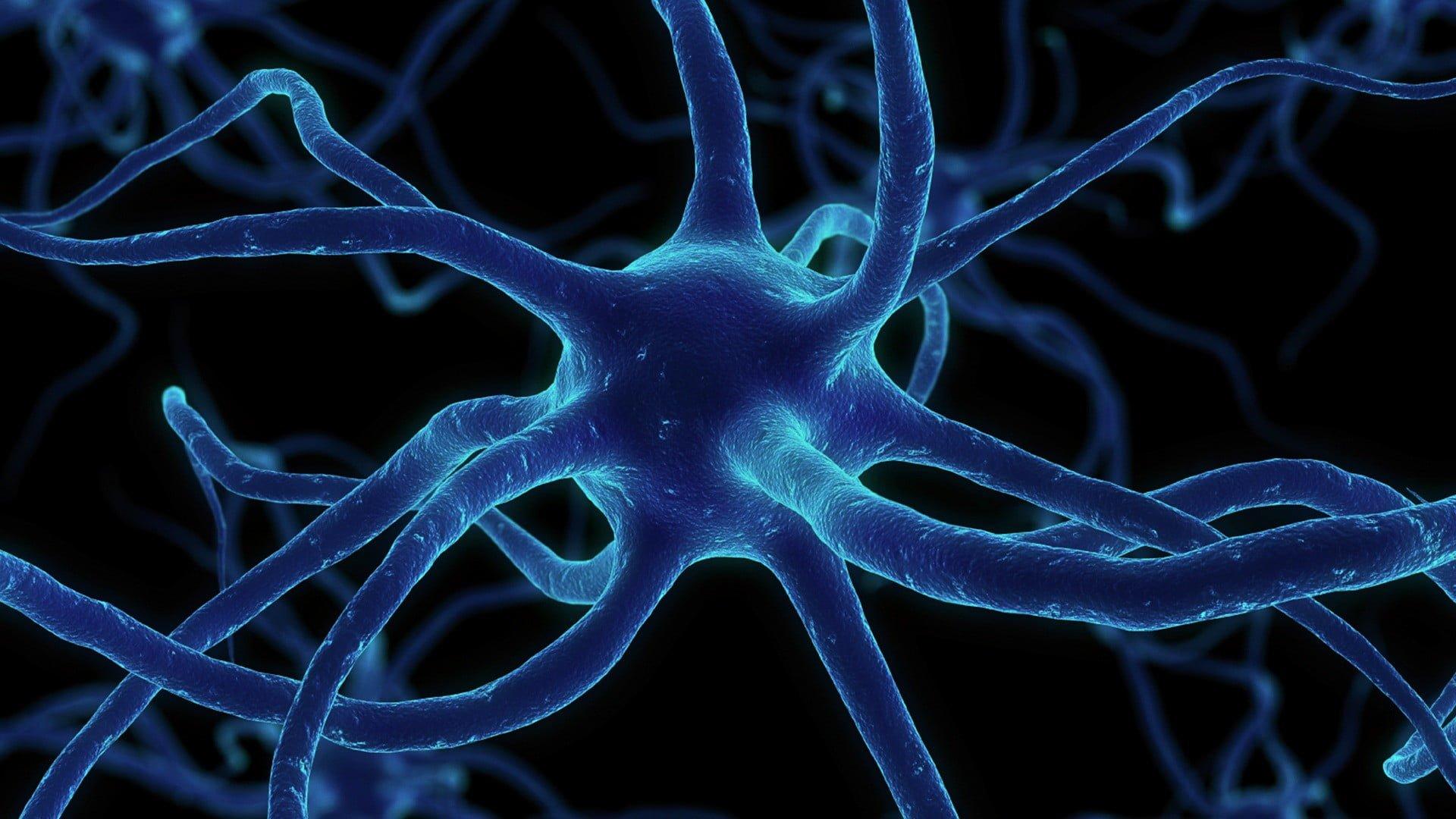 Nöron Nedir?