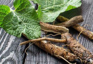Dulavratotu Kökü Faydaları: Bu Güçlü Bitki Nasıl Kullanılır?