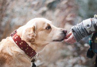 """Köpekler Kanser Tespitinde """"İleri Teknolojiden"""" Daha İyi Olabilir Mi?"""