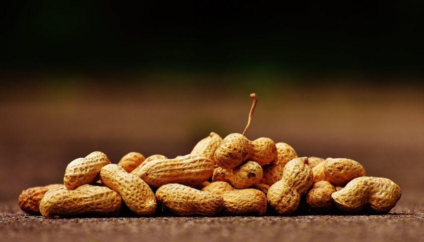 Yer Fıstığı Alerjisini Probiyotiklerle Yenebilir Miyiz?