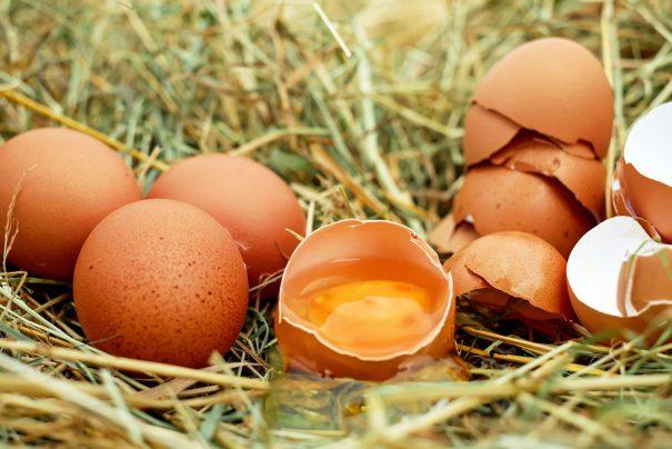 Yumurta Kabuğu Kemik Zedelenmesine İyi Geliyor