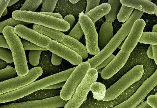Bacillus Coagulans Nedir? Hangi Durumlarda Kullanılır?