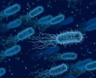 Bifidobacteria Nedir? Hangi Durumlarda Kullanılır?