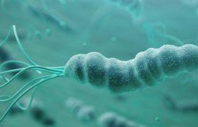 Probiyotik Suşu Helikobakter Pilori'nin Neden Olduğu Ülserlerin Tedavisine Yardımcı Olabilir