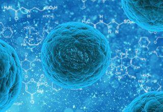 Lactobacillus Nedir? Hangi Durumlarda Kullanılır?