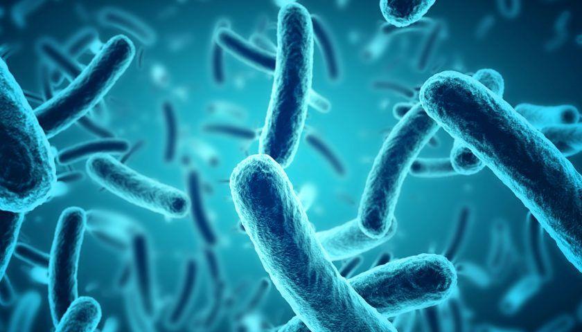 Saccharomyces Boulardii Nedir? Hangi Durumlarda Kullanılır?