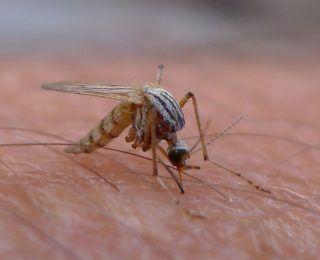Sivrisinek Isırığı İle Geçen Hastalıklar Nelerdir?