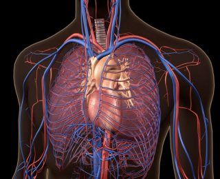 Küçük Hücreli Olmayan Akciğer Kanseri
