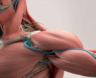 Musküler Distrofi: Tipleri, Semptomları ve Tedavisi